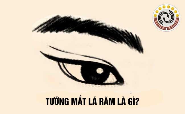 Tướng mắt lá răm là gì & Người sở hữu có [VẬN MỆNH] #Vượng hay #Suy?