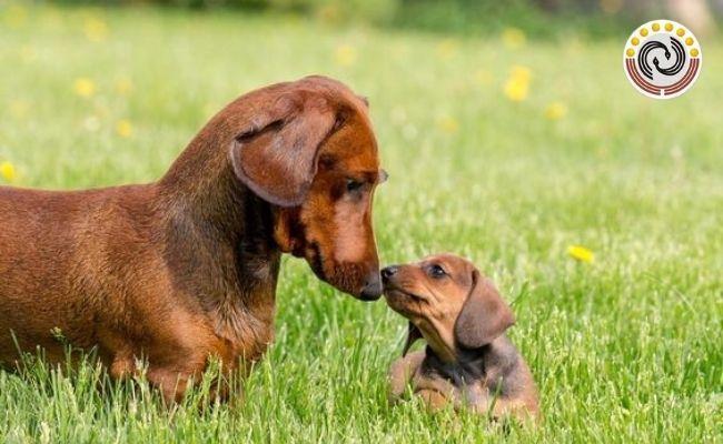 Giải mã ý nghĩa hiện tượng chó đẻ 1 con điềm báo hên hay xui