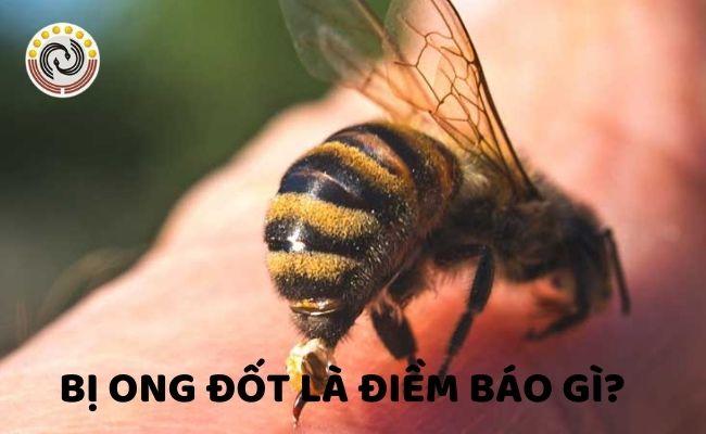 bi ong dot