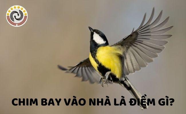 Chim bay vào nhà là điềm gì?