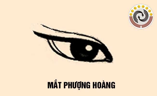Mắt phượng hoàng có đặc điểm gì & Xem tướng mắt phượng hoàng ở nam giới và nữ giới có ý nghĩa gì?