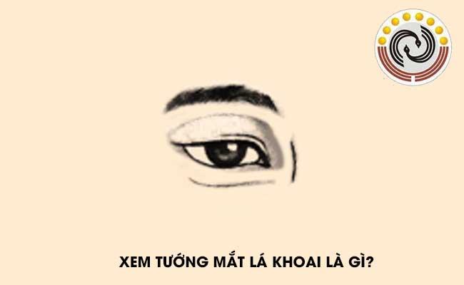 Tướng mắt lá khoai nói lên điều gì &  Xem tướng mắt lá khoai #Sướng hay #Khổ